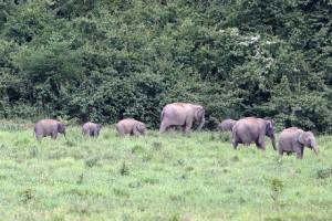 Elefantensafari_67
