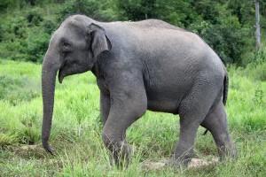 Elefantensafari_87