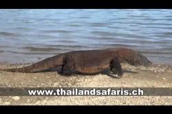 Komodo Dragon - Die letzten Drachen dieser Welt
