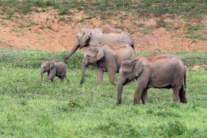 pauschalreisen-elefantensafari-13