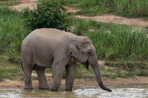 pauschalreisen-elefantensafari-3