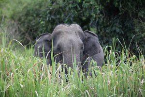 pauschalreisen-elefantensafari-5