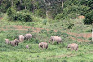pauschalreisen-elefantensafari-9
